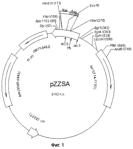 The Chimeric Plasmid Pzzsa For Expression Of A Chimeric Protein